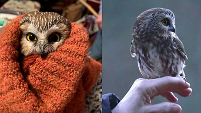 Rocky the owl before and after