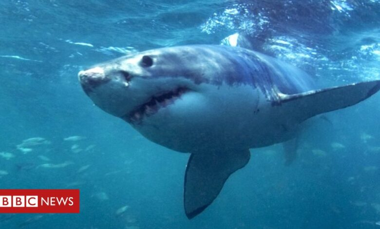 Australia shark attack: Surfer survives mauling that was like 'being hit by a truck'
