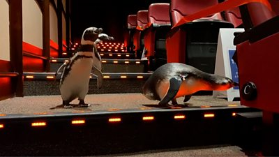 Penguins in the cinema