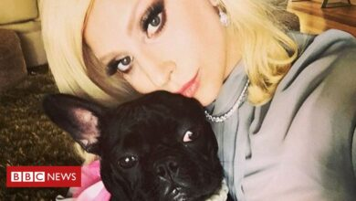 Photo of Lady Gaga's dog-walker shot and bulldogs stolen