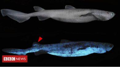 Photo of Glow-in-the-dark sharks found off New Zealand coast